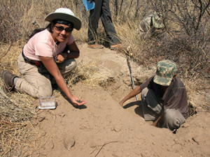 Chaboo collecting the beetle larvae with San Bushman, Kalahari, Namibia